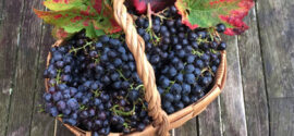 grape-basket